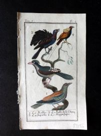 Buffon 1785 Antque Hand Colored Bird Print. Rollers, China Roller 5-4